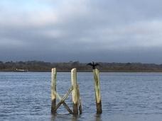 sta cormorant