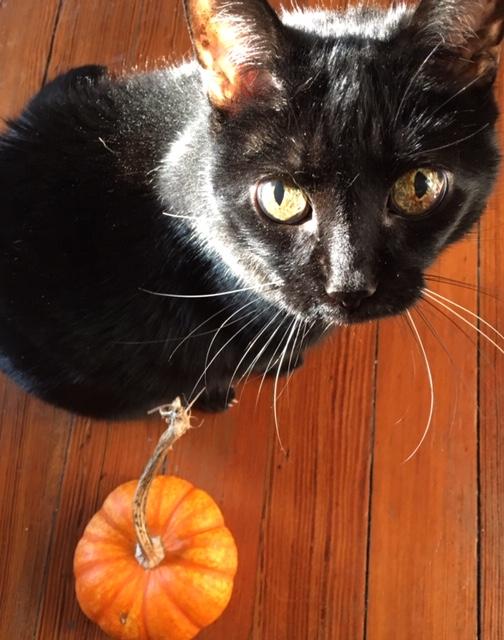 fem gourd